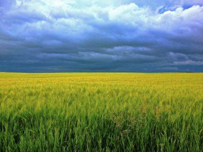 barley-247833_1920